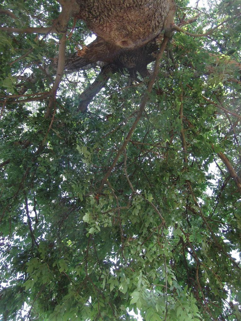 Zu einem faulen Sonntagnachmittag gehört ein schattiges Plätzchen unter einem großen Baum und das konstante Geräusch träge summender Fliegen, gepaart mit akuter Unlust, jemals wieder aufzustehen