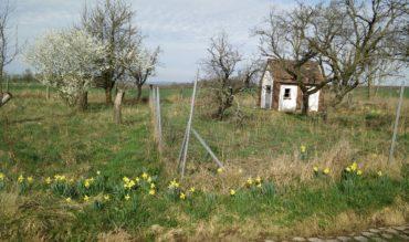 Frühlingsgrüße von Fruitlands