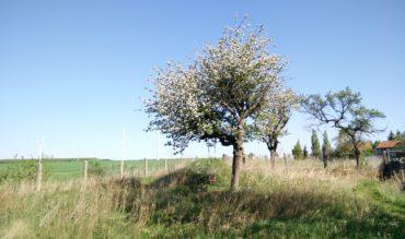 Guten Morgen Fruitlands